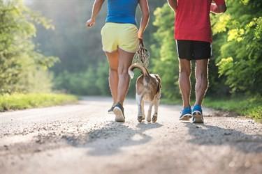 Couple walking a dog